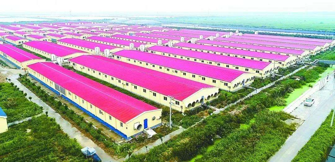 大型养殖场